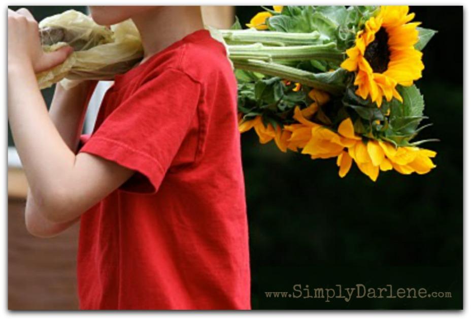 sunflowerboySD