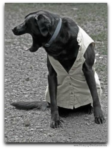 dogTude